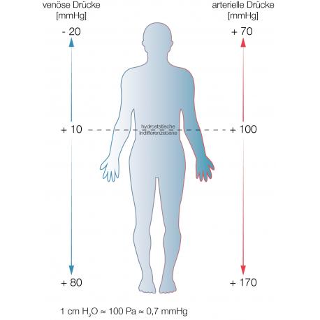 Arterielle und venöse Drücke im Stehen