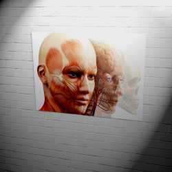Poster | anatomical heads